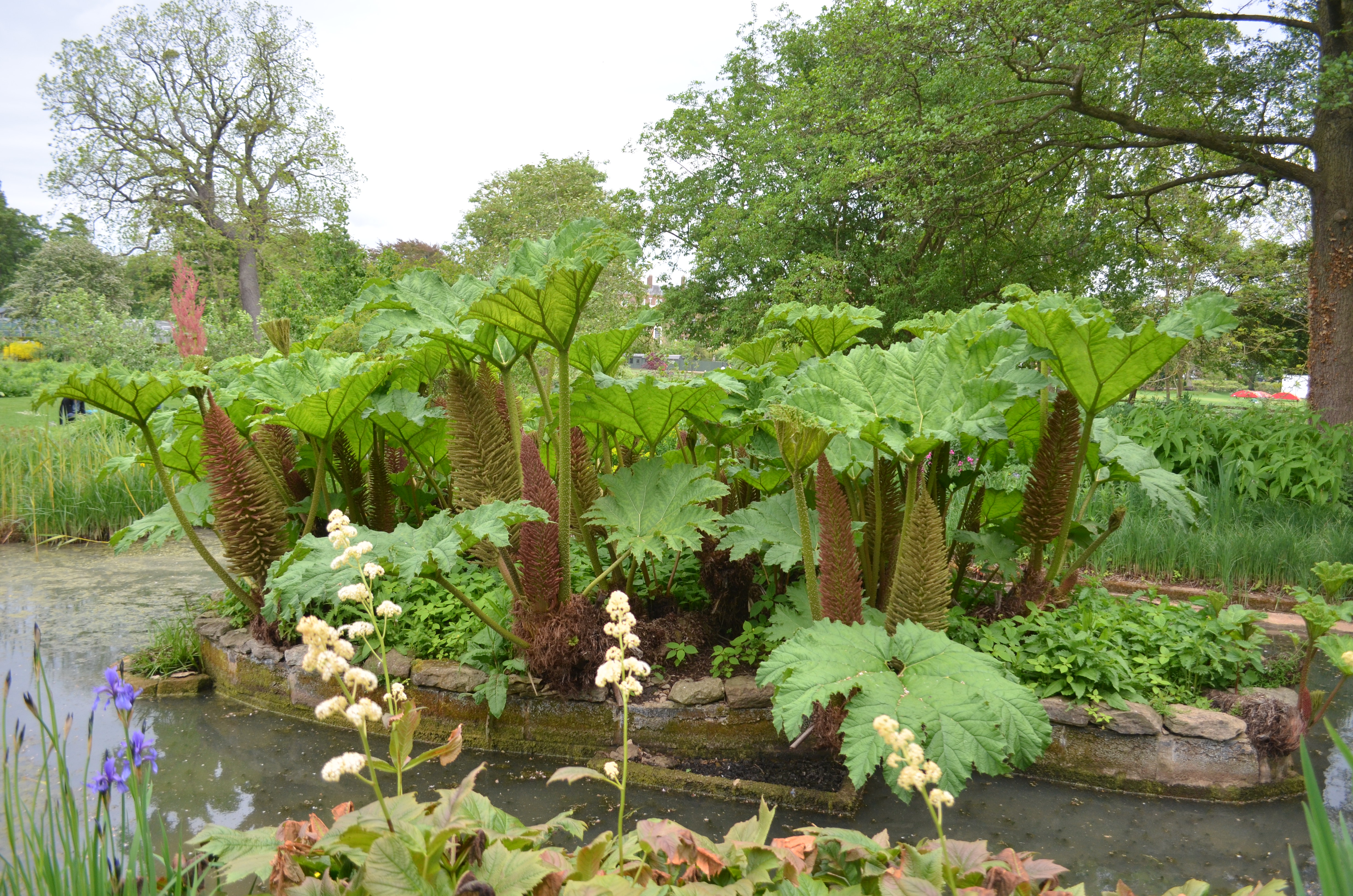 want more information about areas in the lower garden - Bog Garden