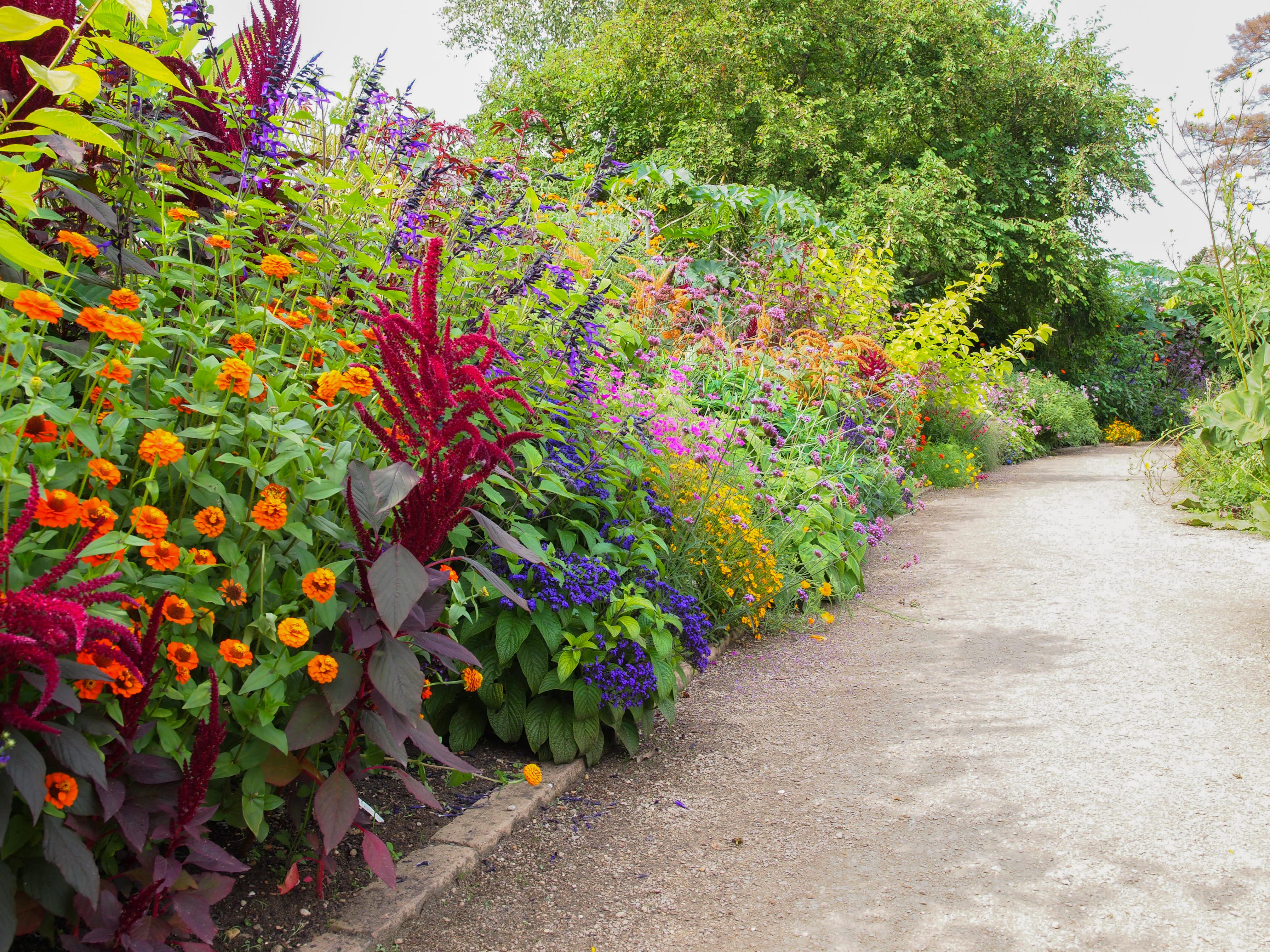 The Autumn Border Oxford Botanic Garden And Arboretum