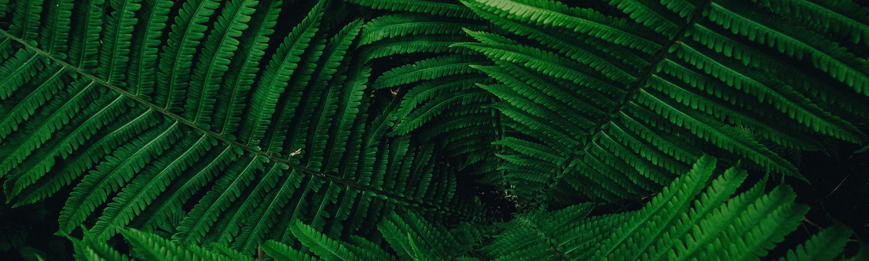 botanical pattern  fern