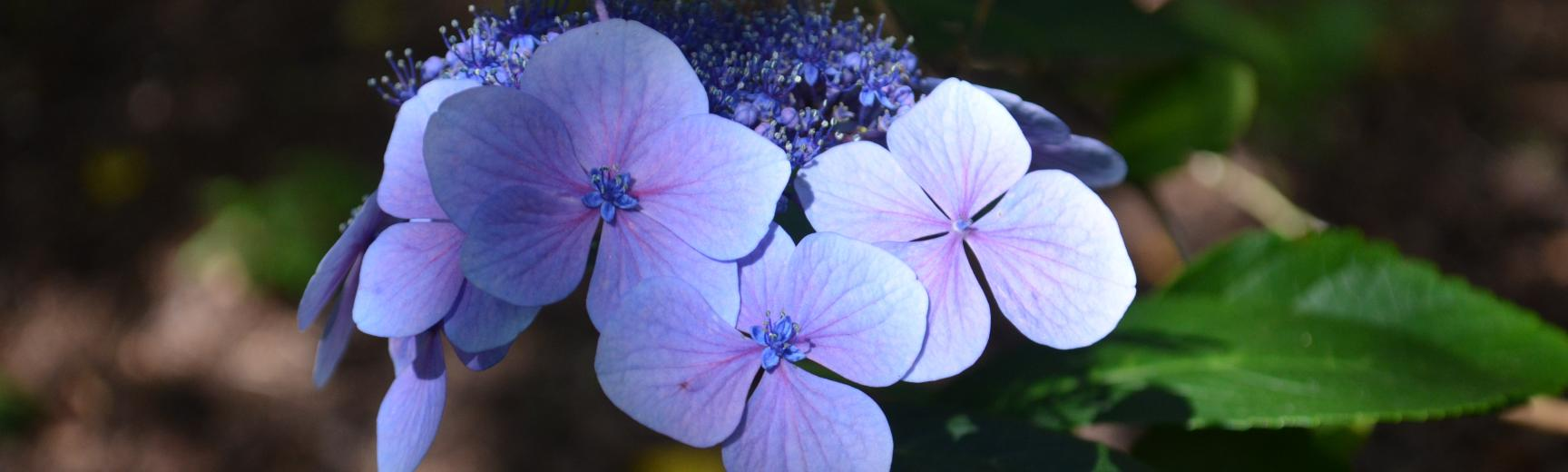 Flower at Arboretum