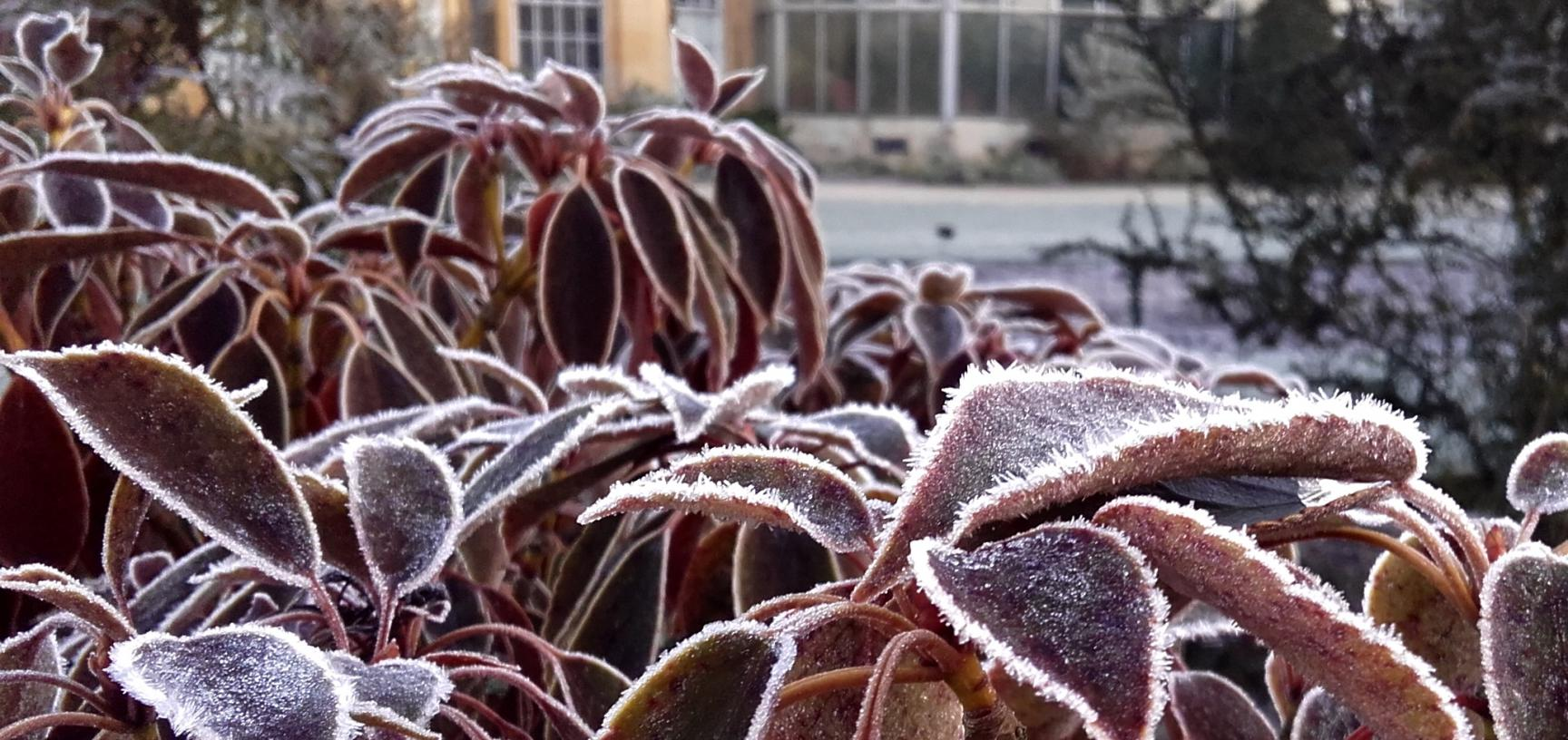The Walled Garden in Winter