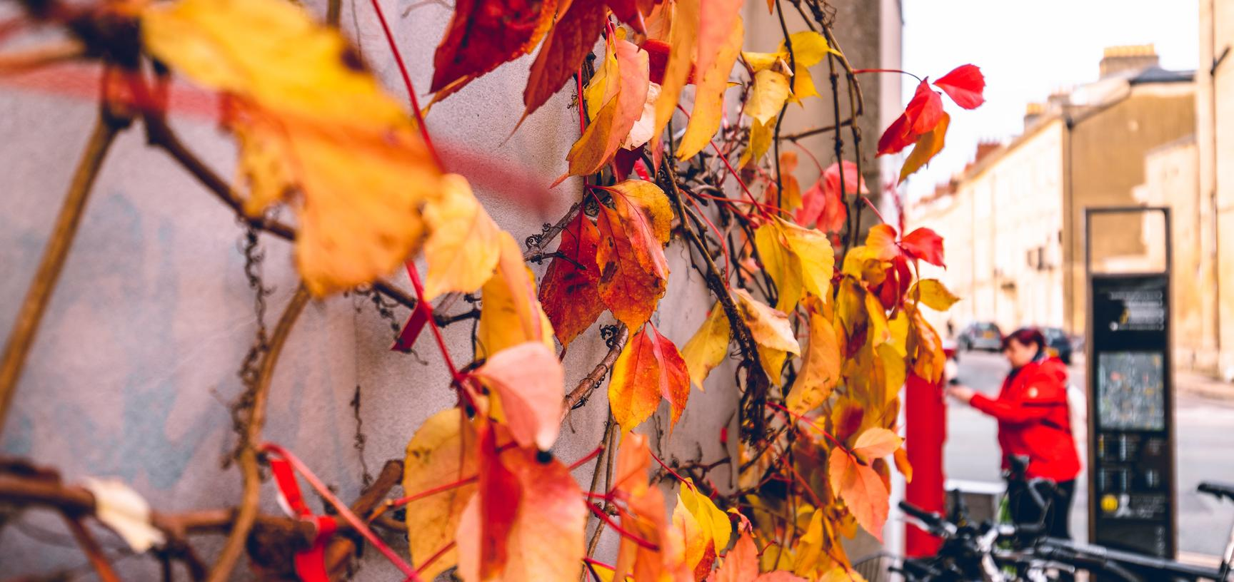 autumn colour in oxford photo by james coleman on unsplash