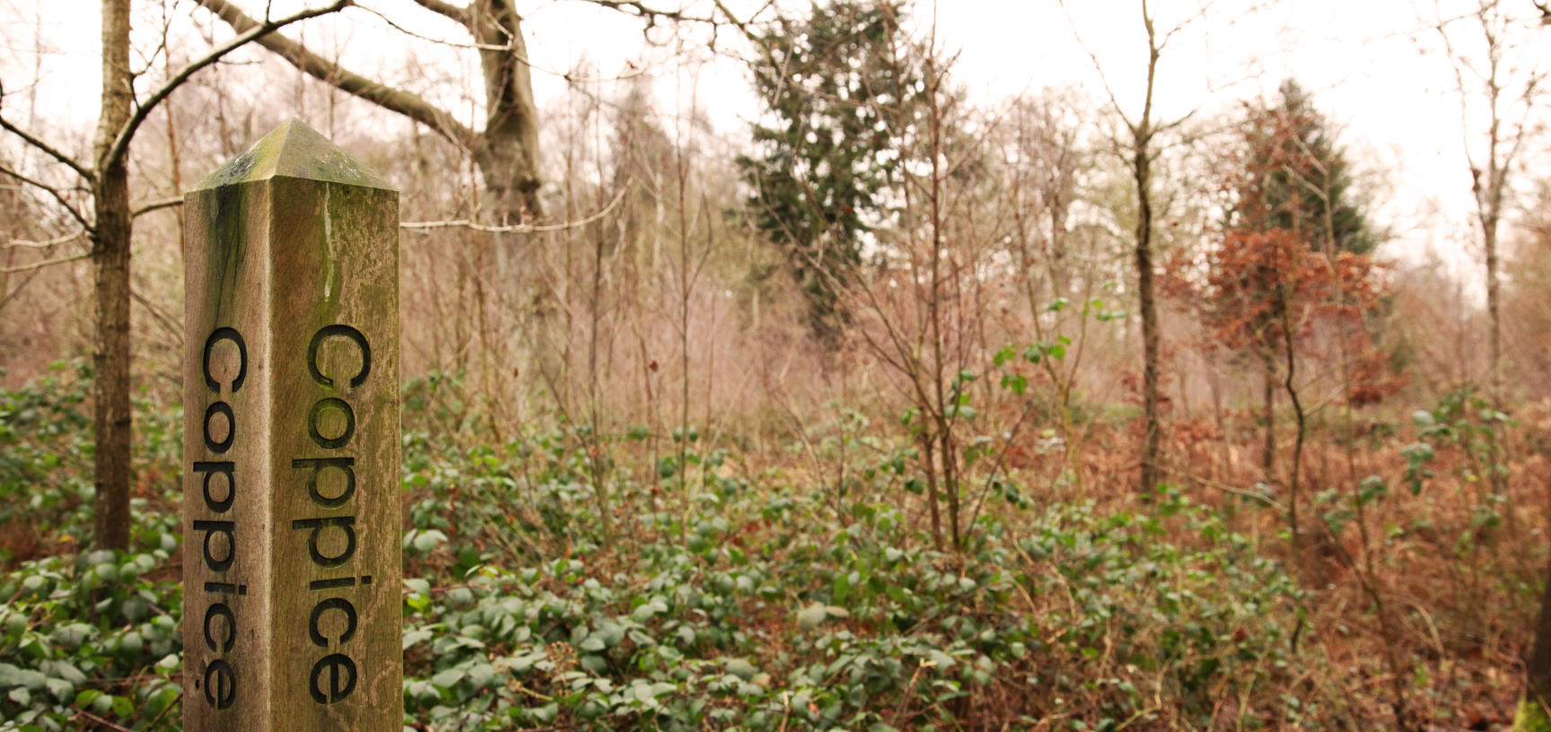 coppice wood