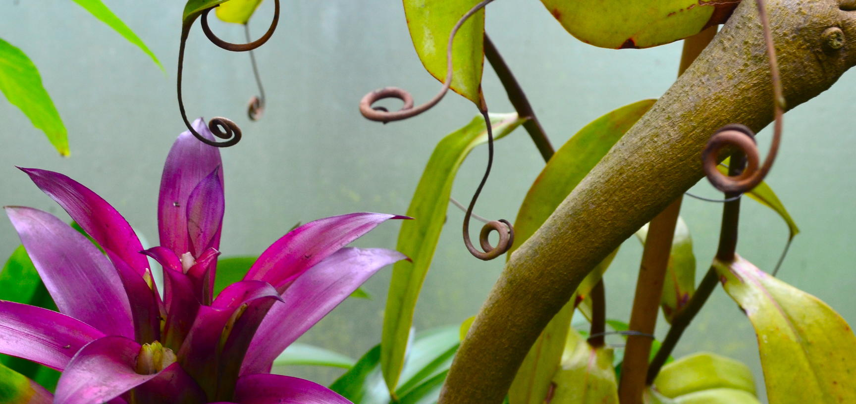 Plants in the Lily House