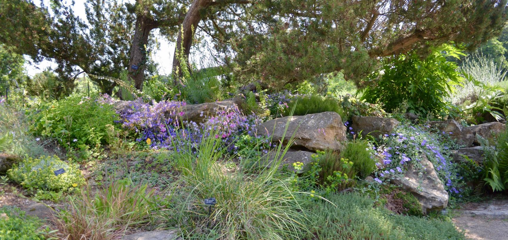The Rock Garden in Summer