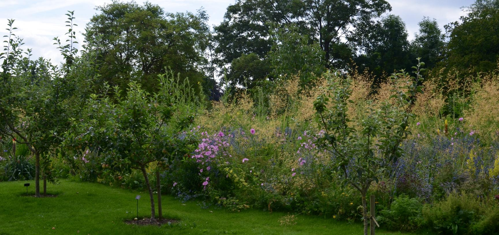 Apple Trees in the Lower Garden