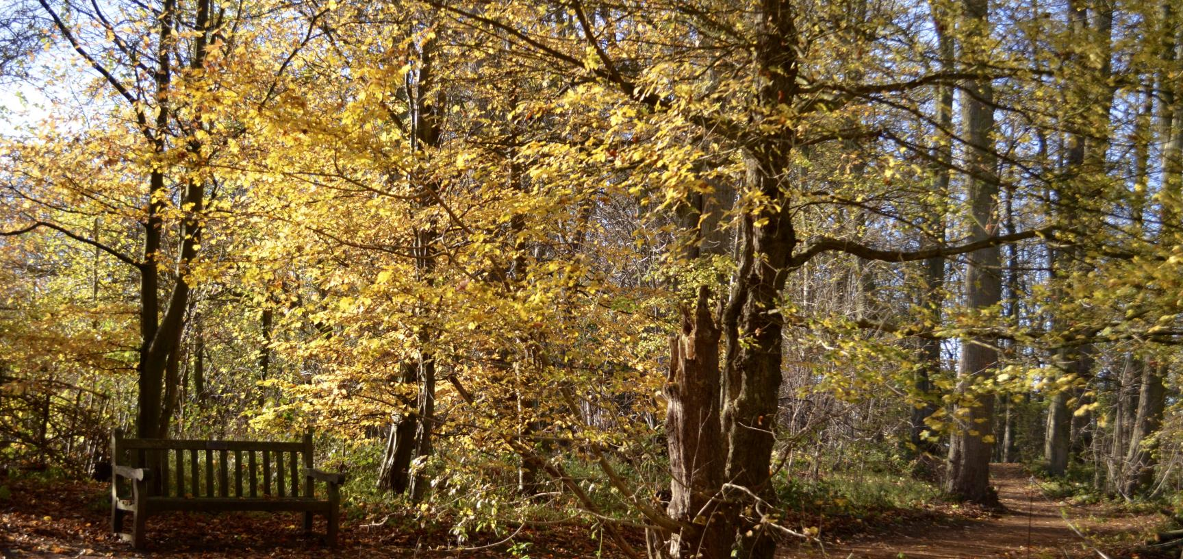 Lime Wood in Autum