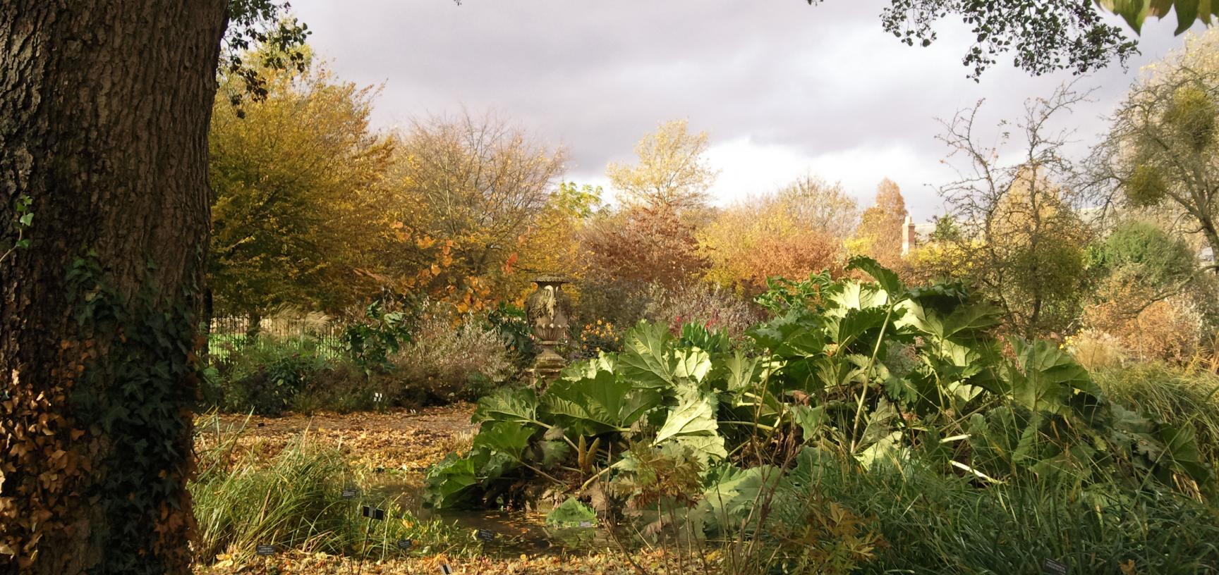 Bog Garden in Autumn
