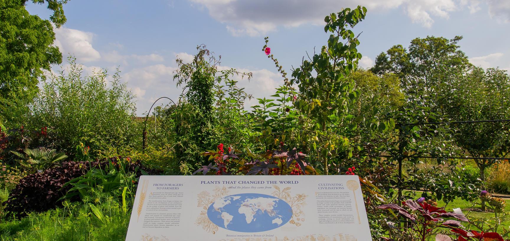 plants that changed the world  oxford botanic garden  lower garden