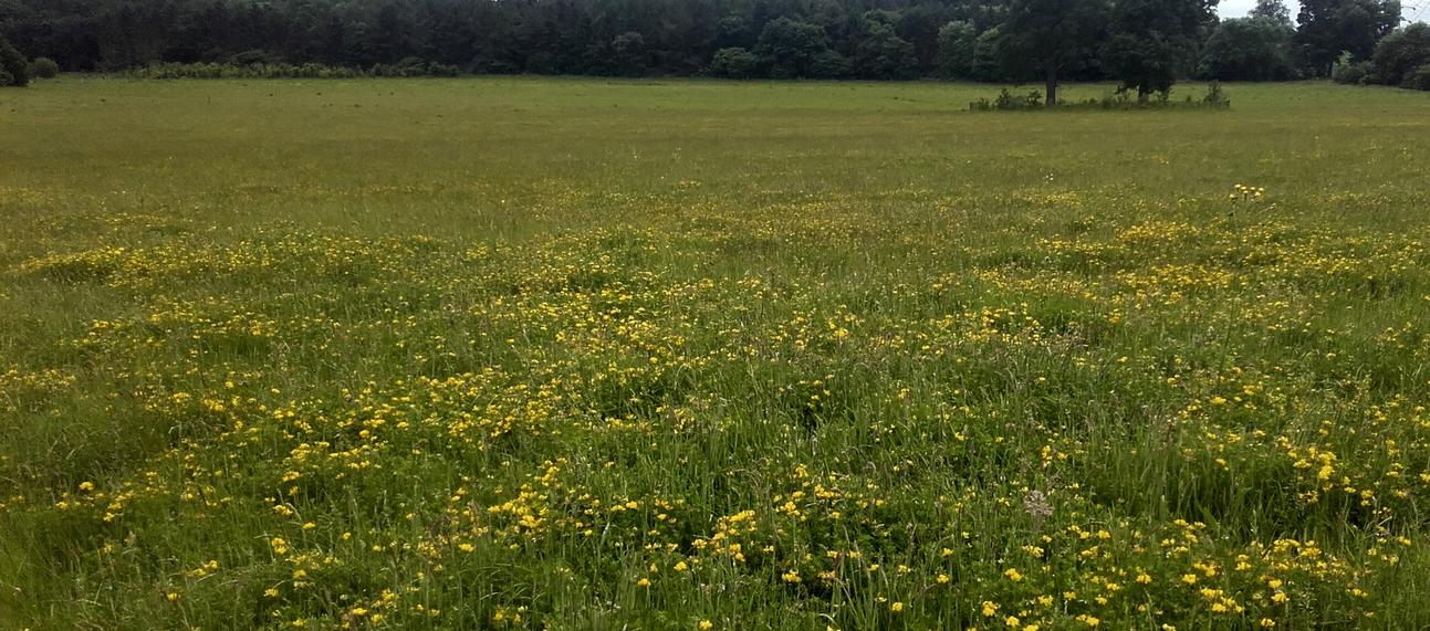 Wildflower Meadows at the Arboretum