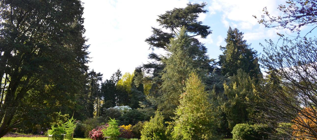 Glade at the Arboretum