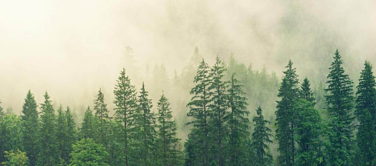 fog 3622519 960 720 pixabay