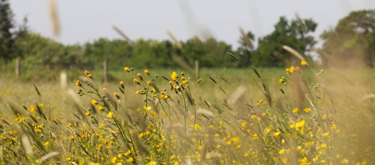 Wildflower meadows - Harcourt Arboretum