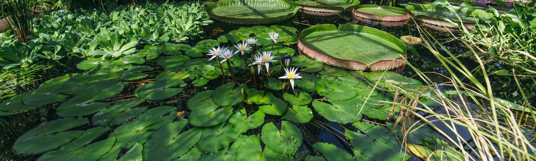 botanicgardensbyianwallman 3512