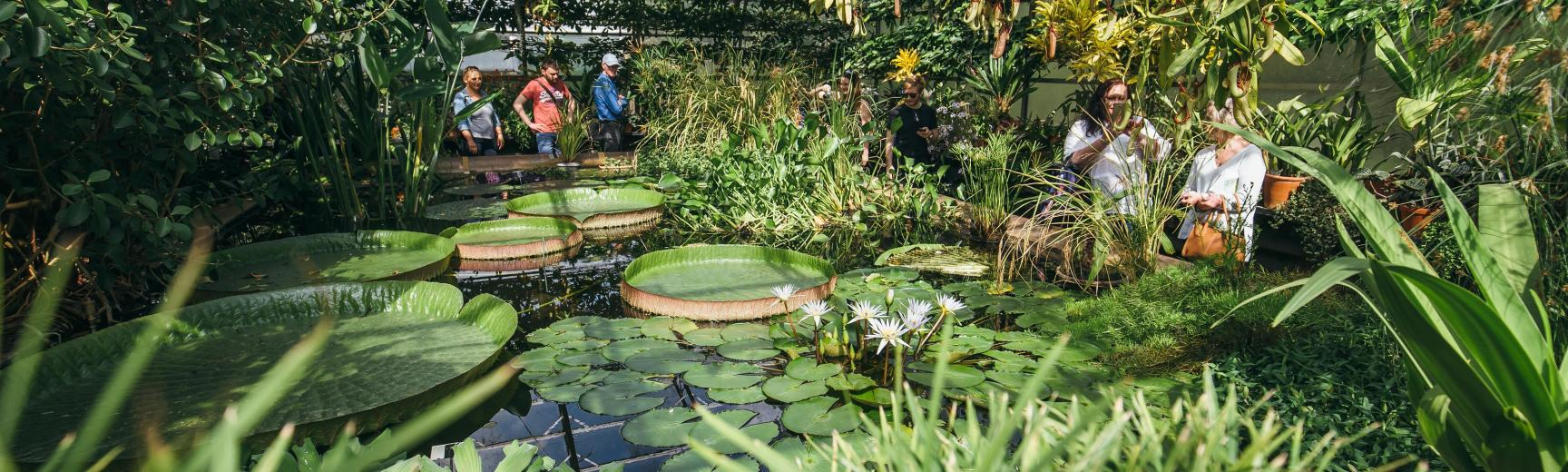 Rainforest Experience Oxford Botanic Garden And Arboretum