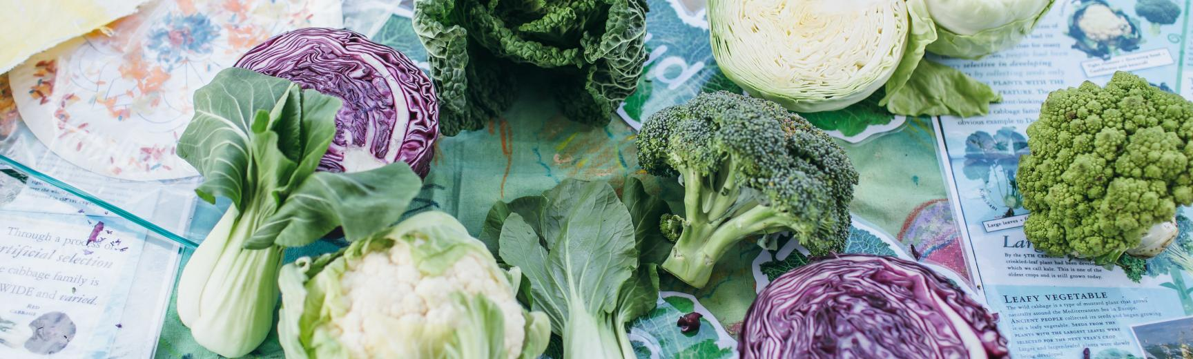 Family Friendly Vegetables (Wallman Lo Res