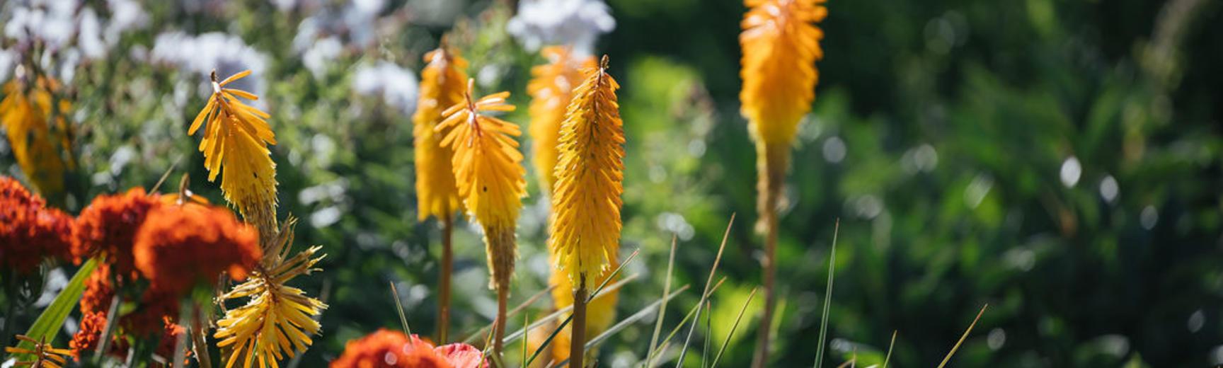 botanicgardensopeningbyianwallman 5236