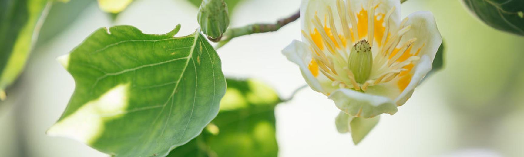 botanicgardensopeningbyianwallman 5683