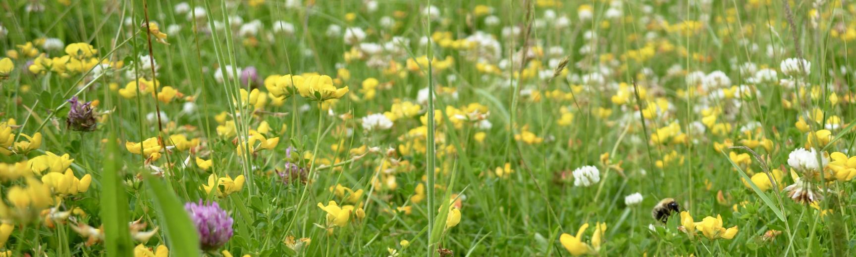 Wildflower Meadows