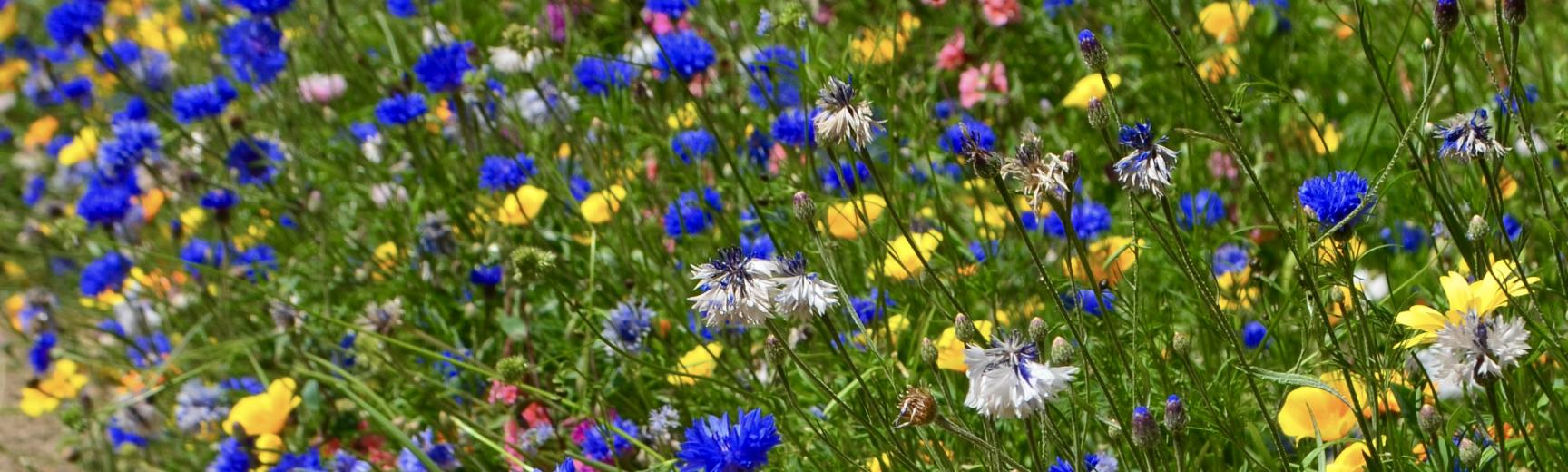 Wildflower Bed