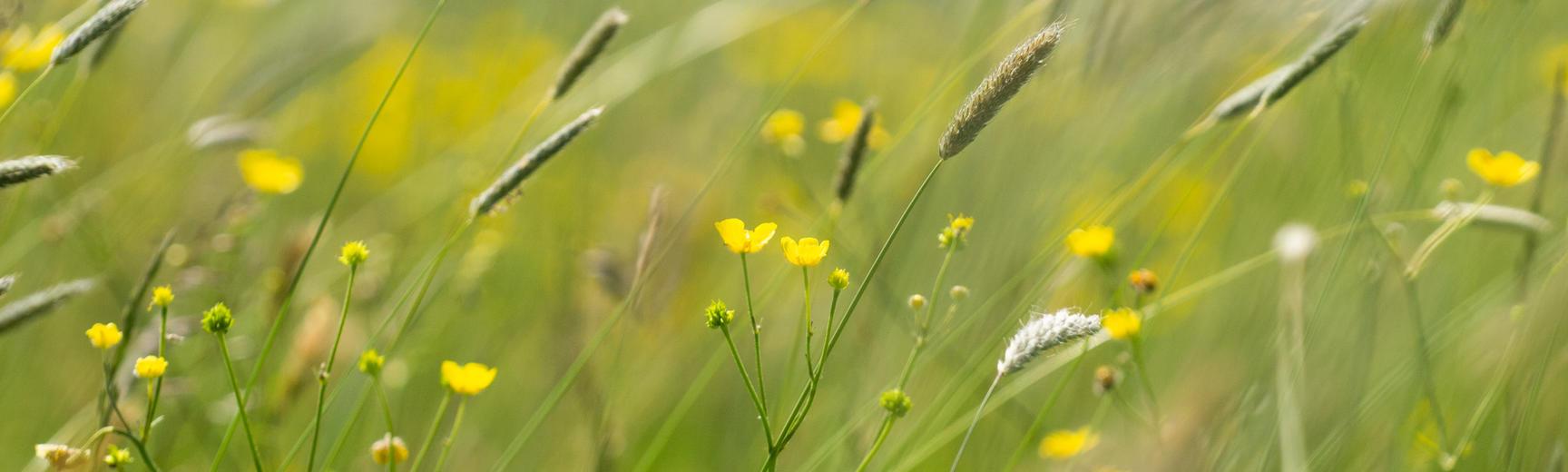 Harcourt Arboretum - Wildflower meadow
