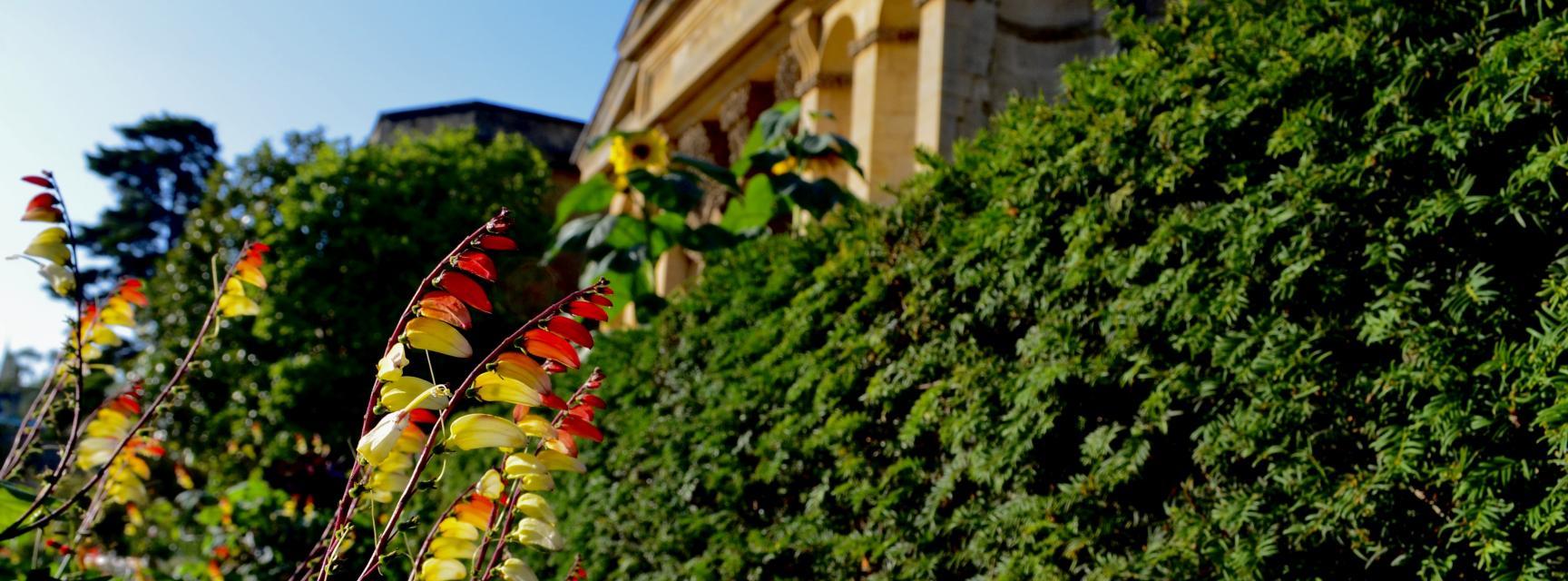 Visit The Oxford Botanic Garden