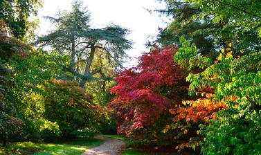 Acer Glade at Harcourt Arboretum