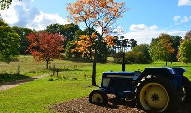autumn tractor arboretum