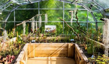 carnivorous plant house