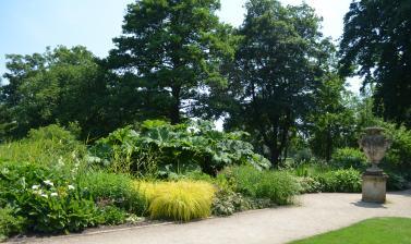 The Bog Garden in Summer
