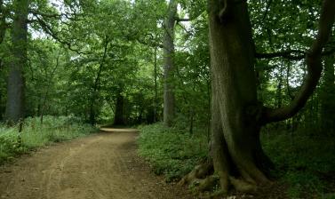 Native Woodland Path