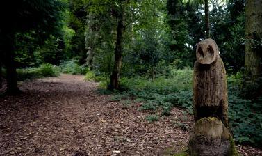 Owl Sculpture near Bluebell Wood