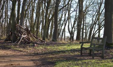 Lime Wood in Winter