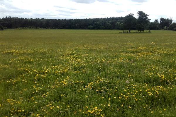 Wildflower Meadows at the Arboretum