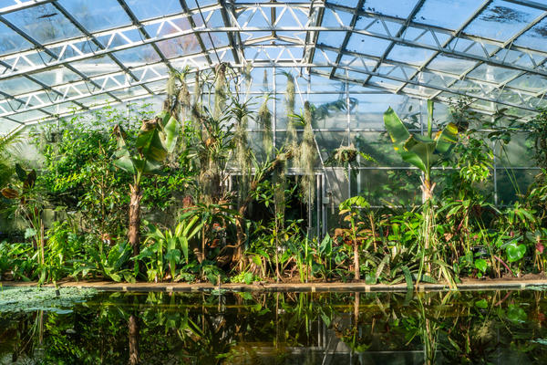 Lily House Winter 2019