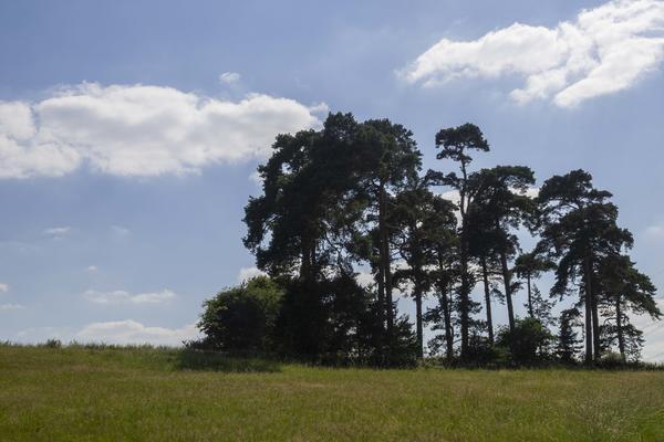 arboretum  meadows  summer