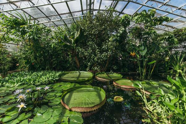 Wallman Lily House HIGH_RES