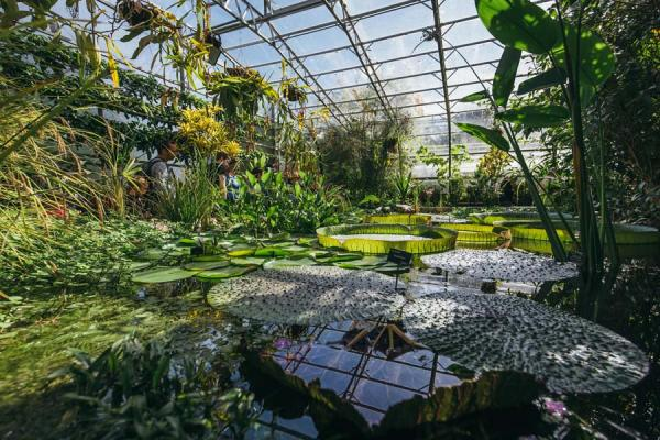 Lily House