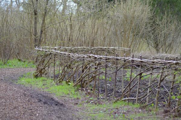 Laid Hedge Coppice Arboretum