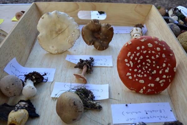 Display at a Fungi Foray