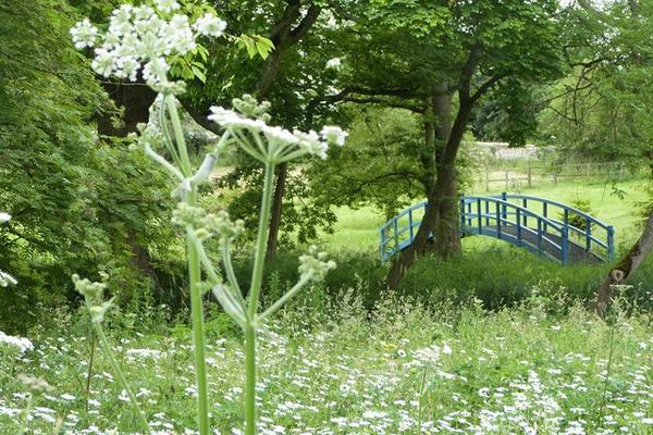 friends visits monet bridge through the meadow