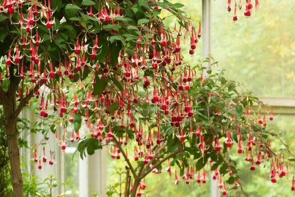 Conservatory at Oxford Botanic Garden