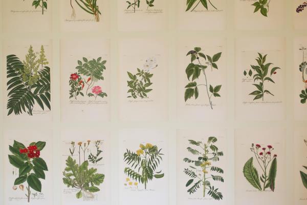 herbarium room  oxford botanic garden