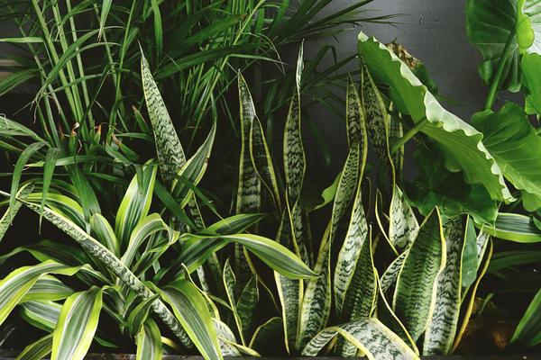 houseplants  winter lectures