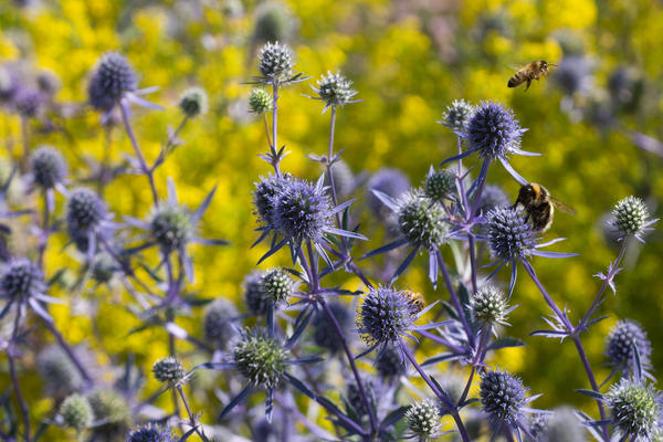 merton borders and bees at oxford botanic garden