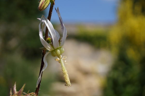 botanicgardensbyianwallman 6752