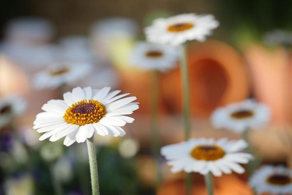 Plant Sale - Flower