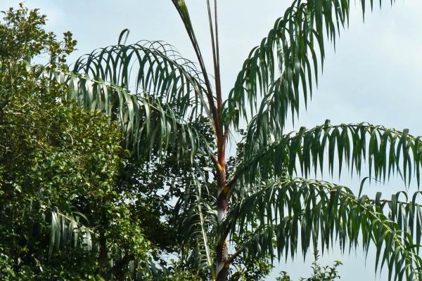 singapore 201211 090wb