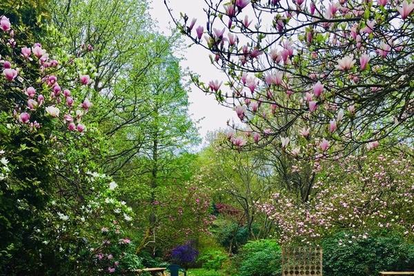 Springtime at Evenley Wood Garden