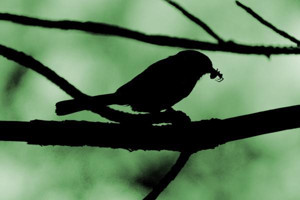 Bird-649864
